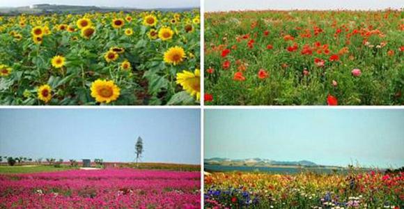 花仙子生态观光园——浪漫文化的